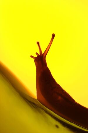 A slug with yellow  backlighting climbing up a glass bottle, concept struggle, journey photo