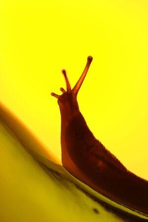 strife: Uninterlinea con il backlighting giallo che si arrampica su una bottiglia di vetro, lotta di concetto, viaggio Archivio Fotografico