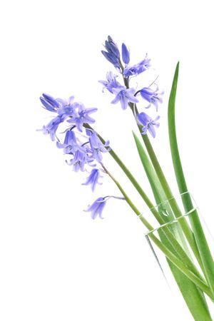 Spring Bluebells in a vase photo