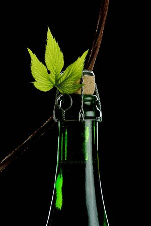 hop plant entwined around beer bottle photo