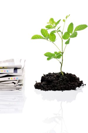 replanting: paper versus tree, concept of recycling your old papers Stock Photo