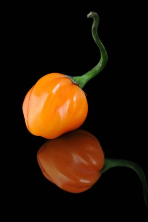 hottest: scotch bonnet pepper, one of the hottest in the world.
