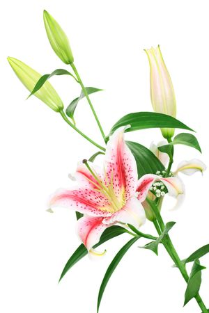 bouquet of beautiful scented lilies