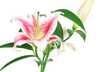 stargazer lily: bouquet of beautiful scented lilies