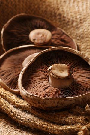 still life of three portobello mushrooms
