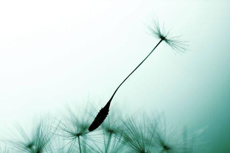 cross processed: dandelion seed at daybreak, cross processed.