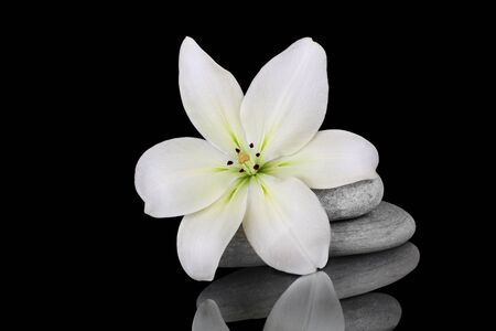 stunning lily with stones on a reflective background photo