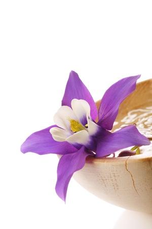 aquilegia: Beautiful Aquilegia flower, mini star variety. placed in wooden water bowl.