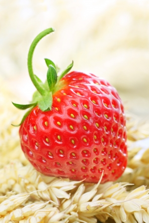 fresh home grown strawberry on a bed of wheat Stock Photo