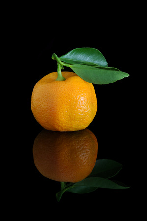 home grown: Home grown calamondins, freshly picked and ready to eat, although a little sour.