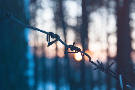 Barbed wire in the forest at sunset. The concept of loneliness, unrequited love