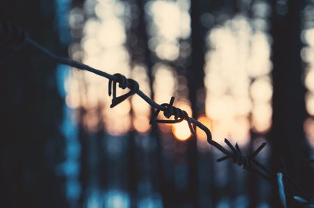 Barbed wire in the forest at sunset. The concept of loneliness