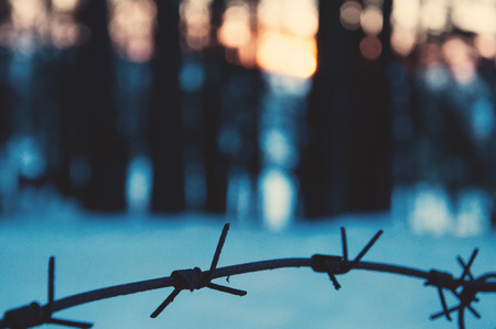 Barbed wire in the forest at sunset. Concept of danger