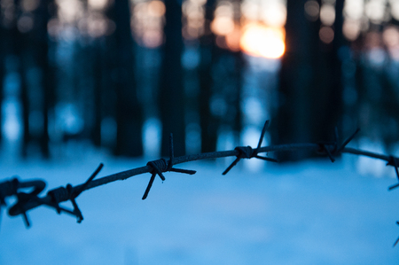 A fence of barbed wire in the forest. Ð¡oncept of the judicial system Stock Photo