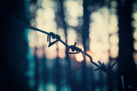 Barbed wire fence in the forest. Ð¡oncept of prison