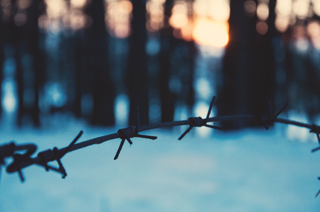 Barbed wire in the forest at sunset. Ð¡oncept of loneliness, separation