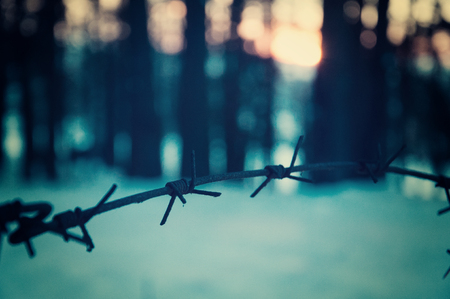 Barbed wire fence in the forest. The concept of crime and punishment Stock Photo