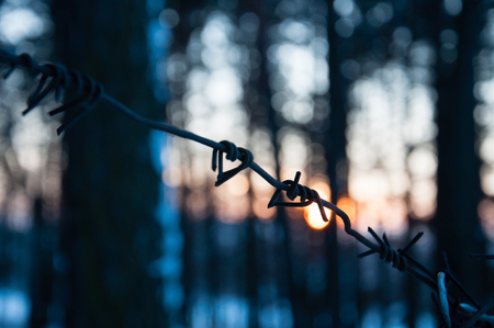A fence of barbed wire in the forest. The concept of breaking the law Reklamní fotografie