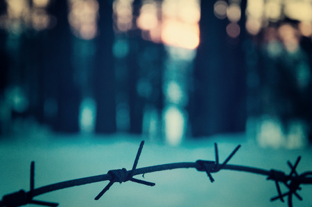 Barbed wire fence in the forest. The concept of loneliness