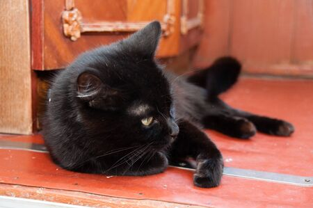 Black cat wearing a collar with yellow beautiful eyes lying on the floor. Animal Day and Cat Day Standard-Bild - 131269823