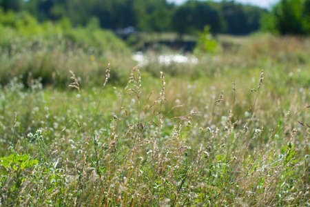 A meadow by the river. Grass close up on nature background. Standard-Bild