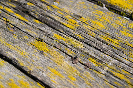 Wood texture, background with copy space. Old wooden planks overgrown with lichen