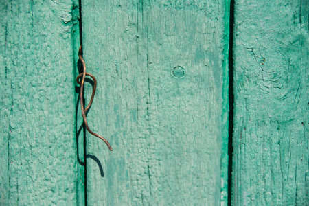 Wood texture, background with copy space. Old wooden barn green or emerald