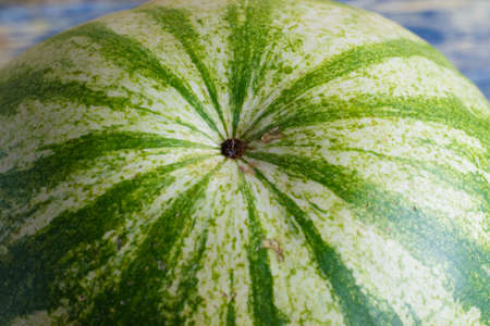 Green peel of watermelon close-up, macro, beautiful natural pattern, background with place for text