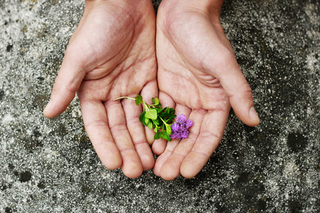 Mens palm with a flower. Human hands and plants. Caring for the environment, ecology and nature. Stock Photo