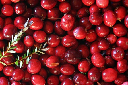 Fresh red cranberries background. With leaves photo