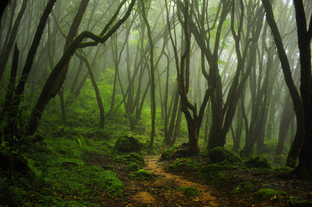 Bosque de Nepal Foto de archivo - 38668817