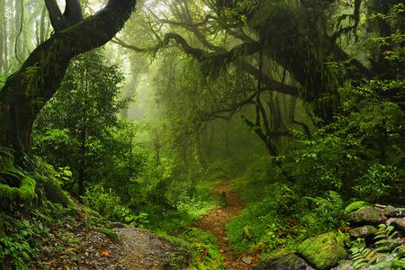 Forêt du Népal Banque d'images - 38668818