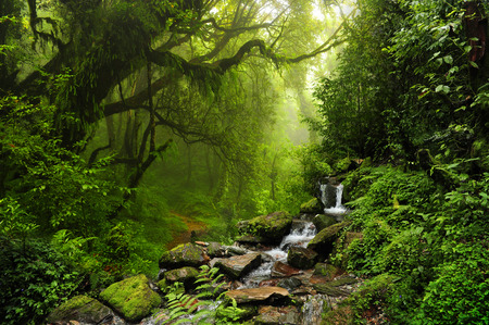 jungle green: Forest of Nepal