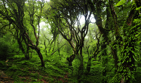 selva: Bosque de Nepal