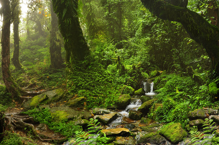 amazon rainforest: Forest of Nepal