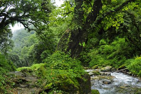 Bosque de Nepal Foto de archivo - 38668883