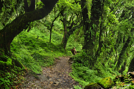 Forest of Nepal