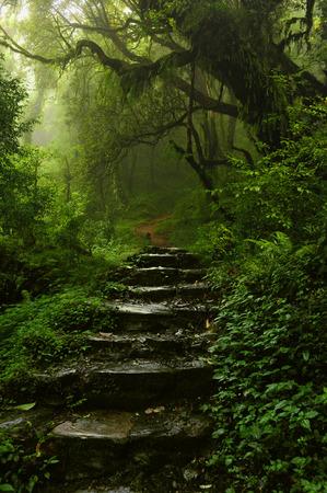Bosque de Nepal Foto de archivo - 39234186