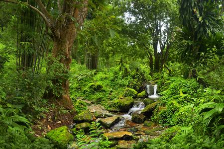 Tailandia selva Foto de archivo - 56298646