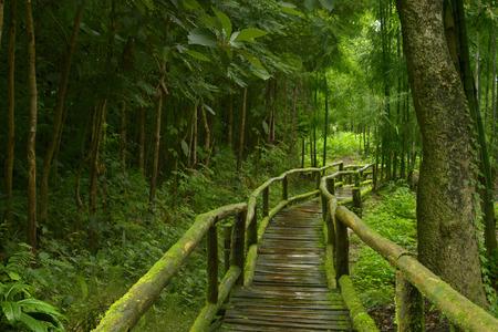 Thailand jungle 版權商用圖片 - 56298649