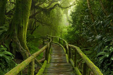 ネパール ジャングル