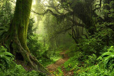 Nepal selva  Foto de archivo - 56298673