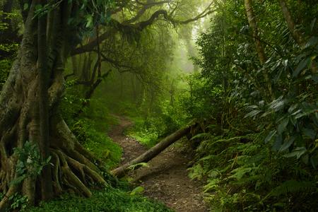 rainforest background: Nepal jungle