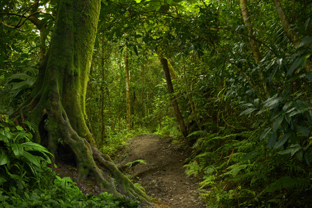 Jungle tropicale Banque d'images - 58761984