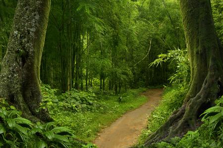 Tropical jungle 版權商用圖片 - 58761986
