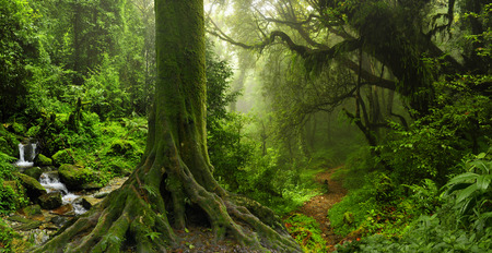 primeval: Deep tropical jungles of Southeast Asia in August