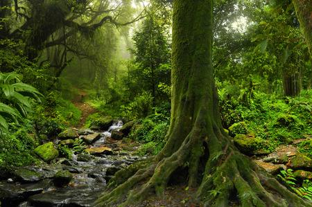 bouddha: Forêt tropicale avec rivière dans le nord de la Thaïlande