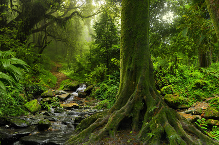 Regenwoud met rivier in het noorden van Thailand