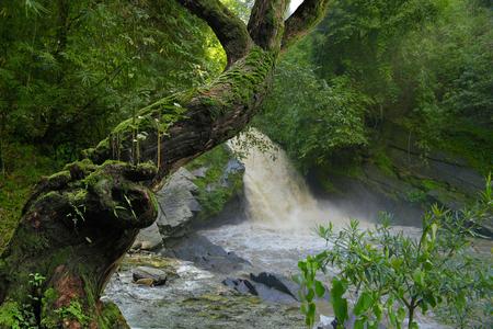 タイの熱帯雨林