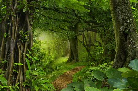 Deep tropical jungles of Southeast Asia in August Banco de Imagens